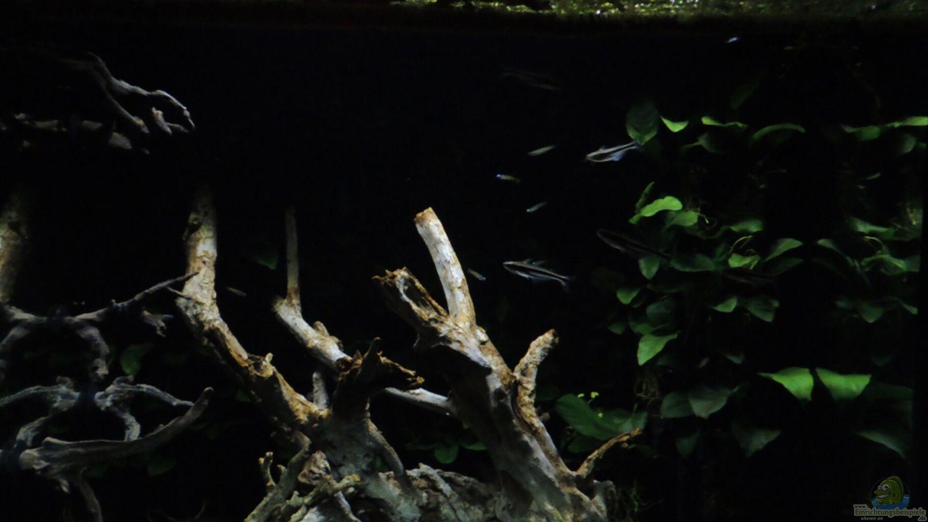 aquarium spiele