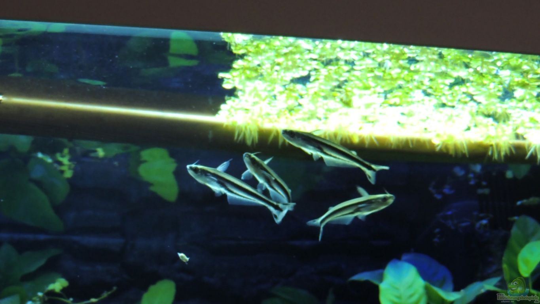 aquarium von k s lido 200. Black Bedroom Furniture Sets. Home Design Ideas