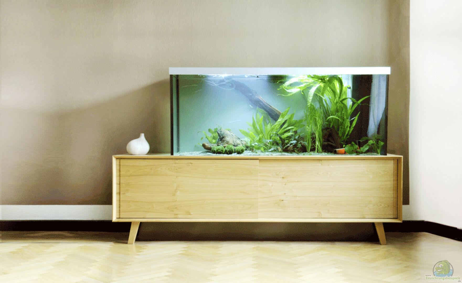 Wohnzimmer Aquarium Sammlung : Wohnzimmer aquarium sammlung sourcecrave