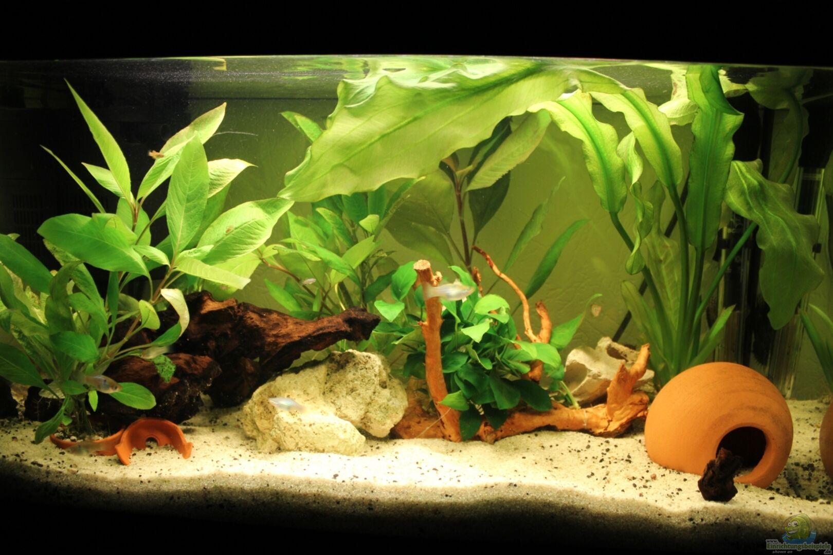 aquarium nach kleinem umbau mit neuer wurzel und anubia aus mein erstes von strandberd. Black Bedroom Furniture Sets. Home Design Ideas