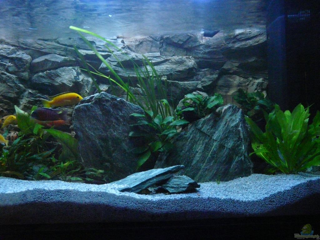 aquarium von chrisly chrisly on malawi. Black Bedroom Furniture Sets. Home Design Ideas