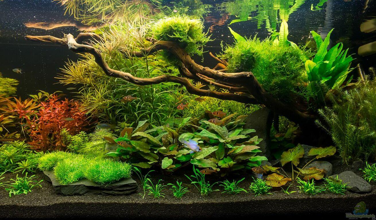 aquarium von finch gr ne wasserwelt. Black Bedroom Furniture Sets. Home Design Ideas