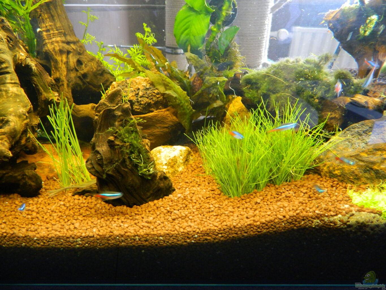 aquarium deko beispiele great dekoration im aquarium nur. Black Bedroom Furniture Sets. Home Design Ideas