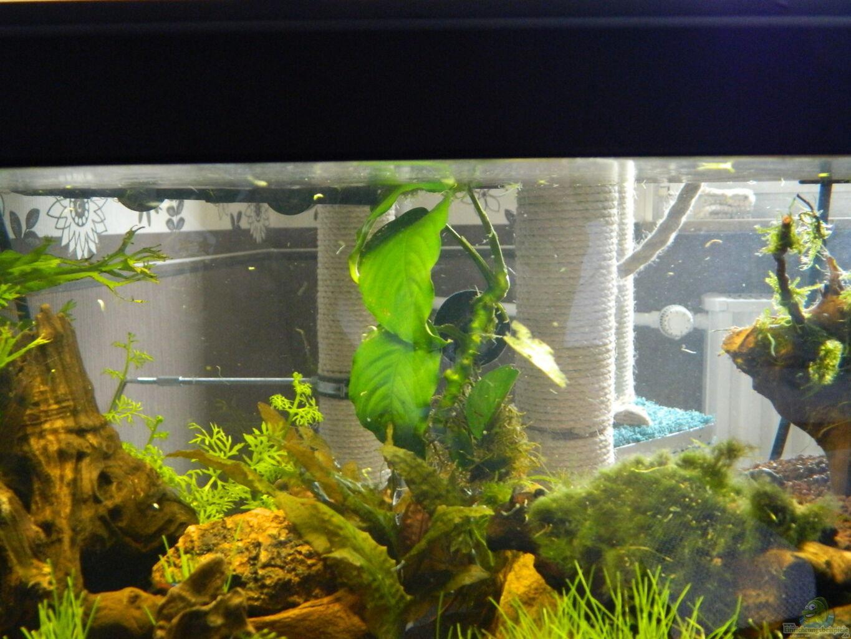 aquarium von nick3 froschparadies nur noch beispiel. Black Bedroom Furniture Sets. Home Design Ideas