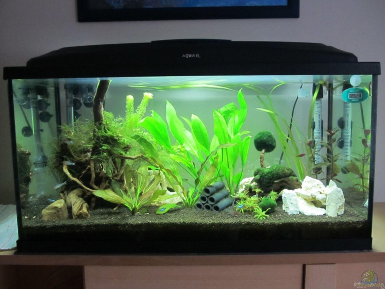 Aquarium von mogwai 27865 mein erstes aquarium for Mein aquarium