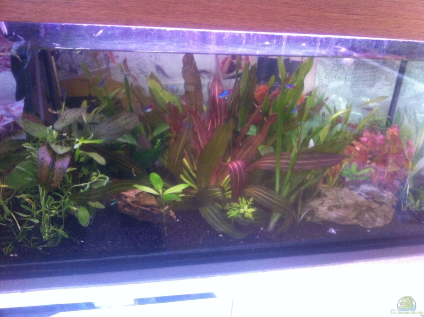 aquarium von olivia 27871 kleines. Black Bedroom Furniture Sets. Home Design Ideas