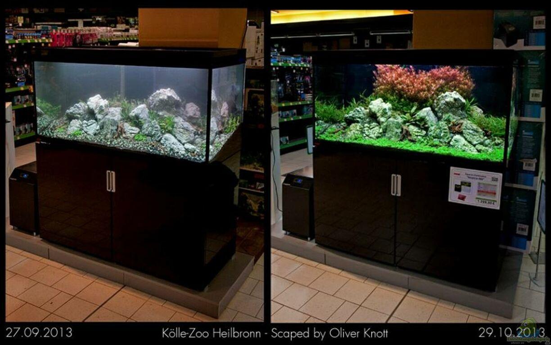 aquarium von goreslayer k lle zoo. Black Bedroom Furniture Sets. Home Design Ideas
