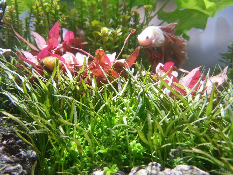 Pflanzen im