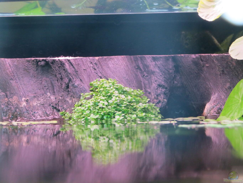 kubakraut an der rückwand aus amazonas nebenfluss von jan s ~ Kühlschrank Eis An Der Rückwand