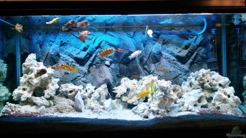 aquarium von flora15 malawibecken. Black Bedroom Furniture Sets. Home Design Ideas