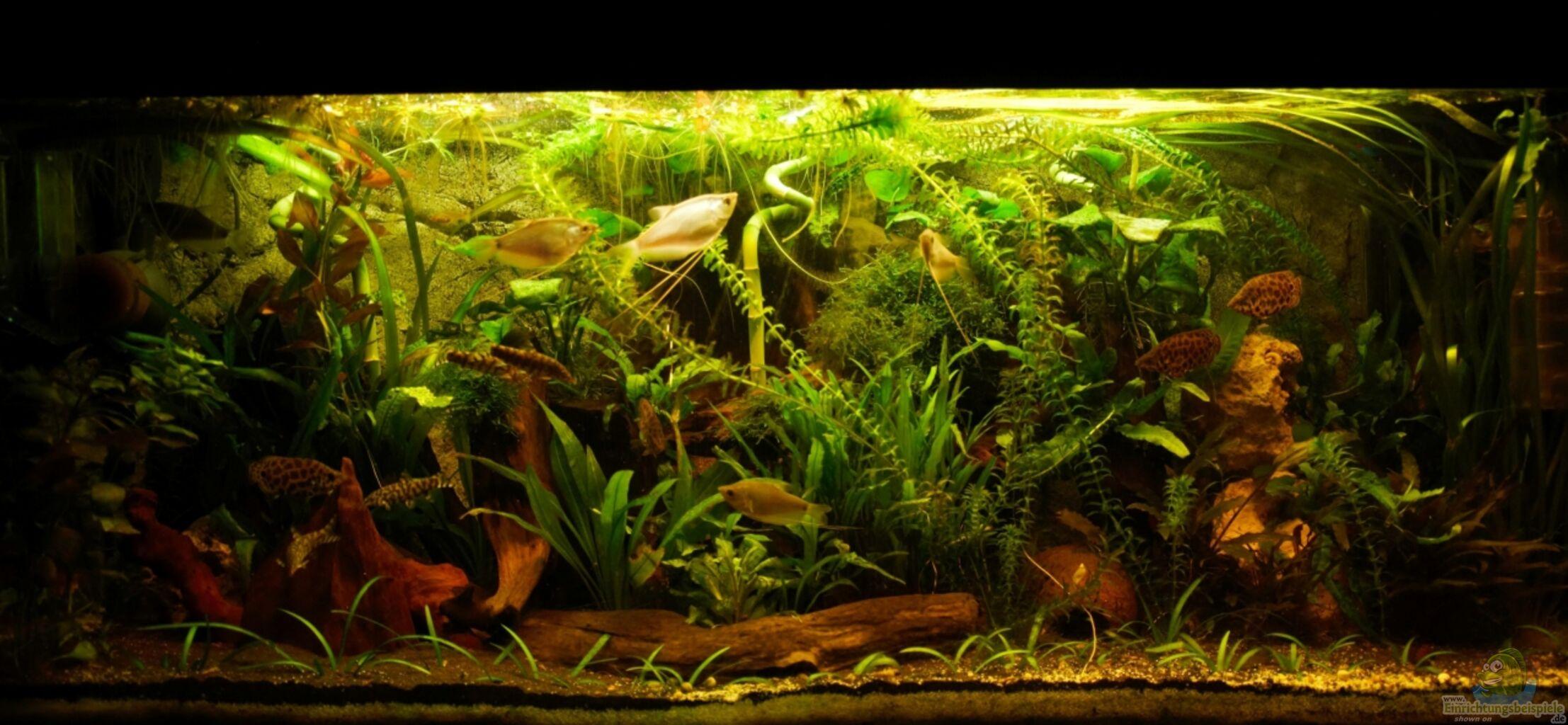 Aquarium von der buschfisch leopard buschfisch becken for Boden aquarium