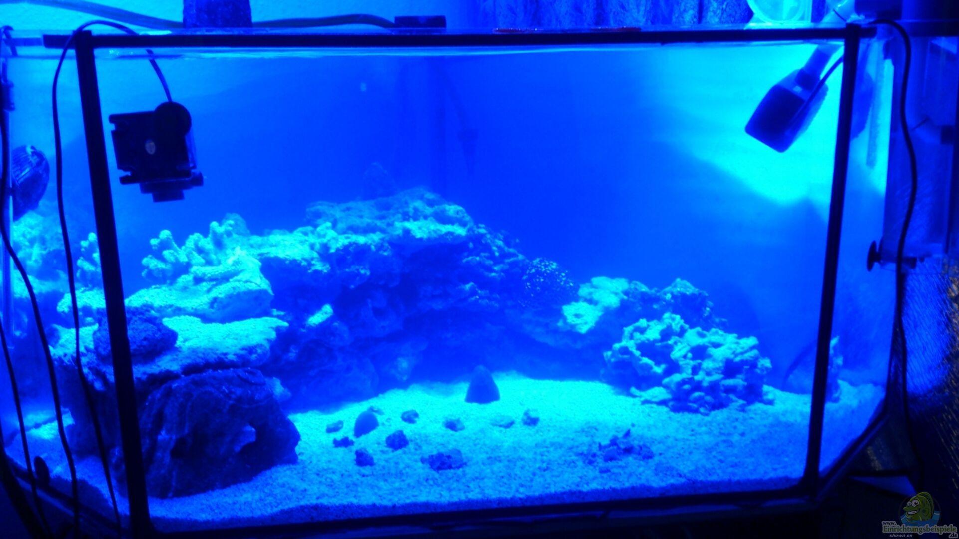 Aquarium von freakesoit becken 28039 for Aquarium becken