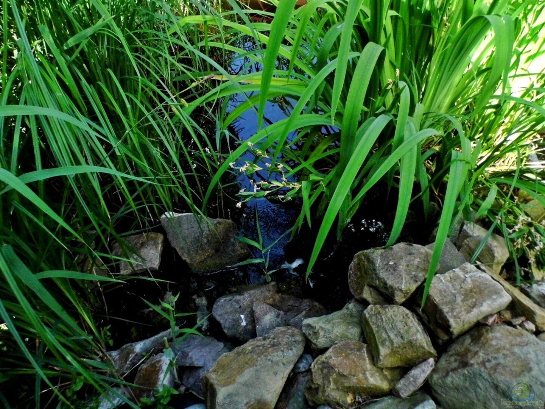 Ger llhalde mit wasserfall juni 2014 aus teich von snooze for Jungfische im teich