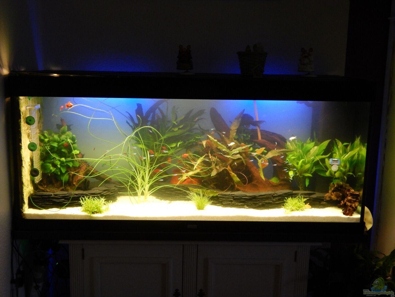 aquarium von heinz von b1 28214 eine neue welt. Black Bedroom Furniture Sets. Home Design Ideas