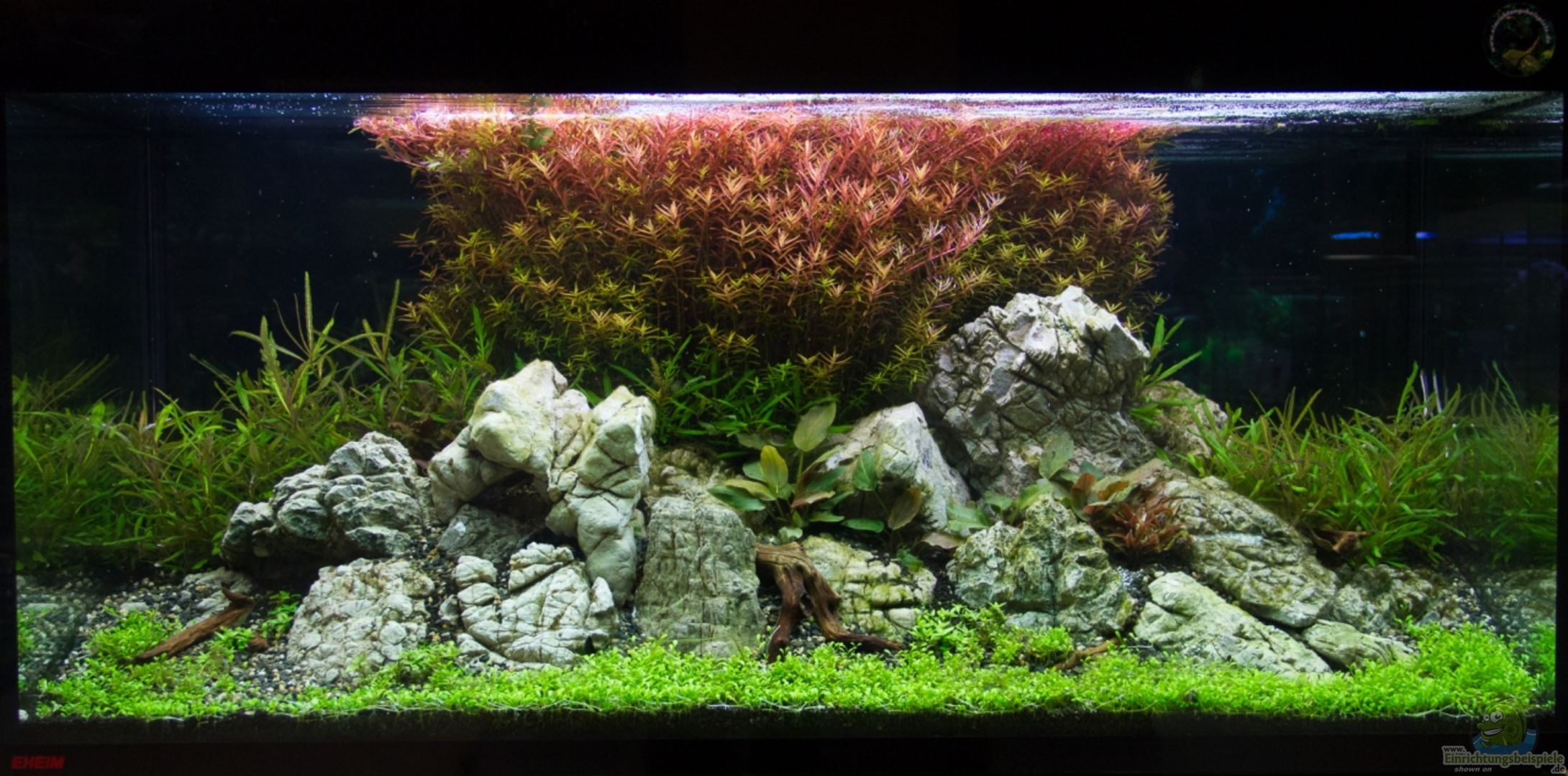 aquarium von koelle zoo 28217 k lle zoo. Black Bedroom Furniture Sets. Home Design Ideas
