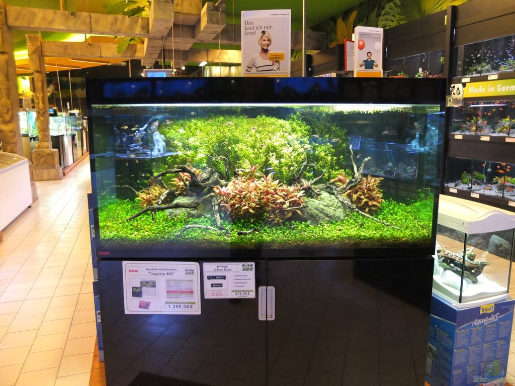 aquarium von koelle zoo k lle zoo. Black Bedroom Furniture Sets. Home Design Ideas