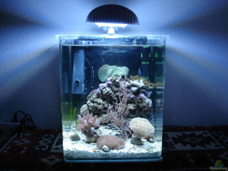 Aquarium von hej kompisar: Becken 28227