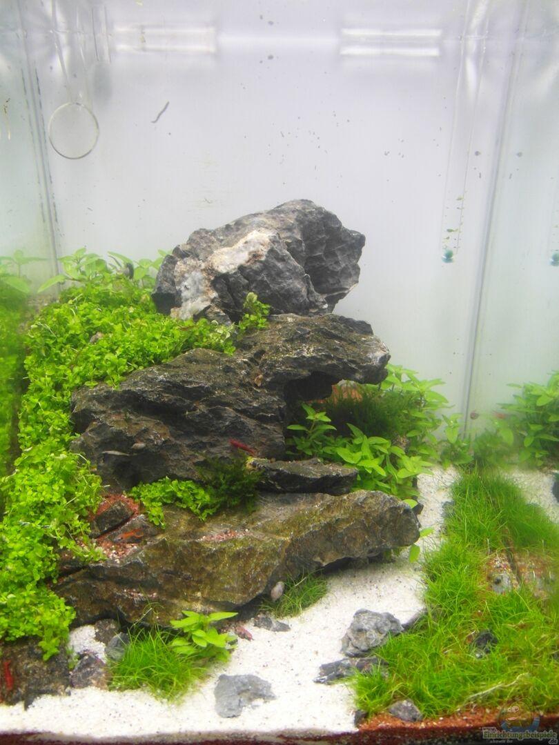aquarium von intershrimpview 28306 soulfly. Black Bedroom Furniture Sets. Home Design Ideas