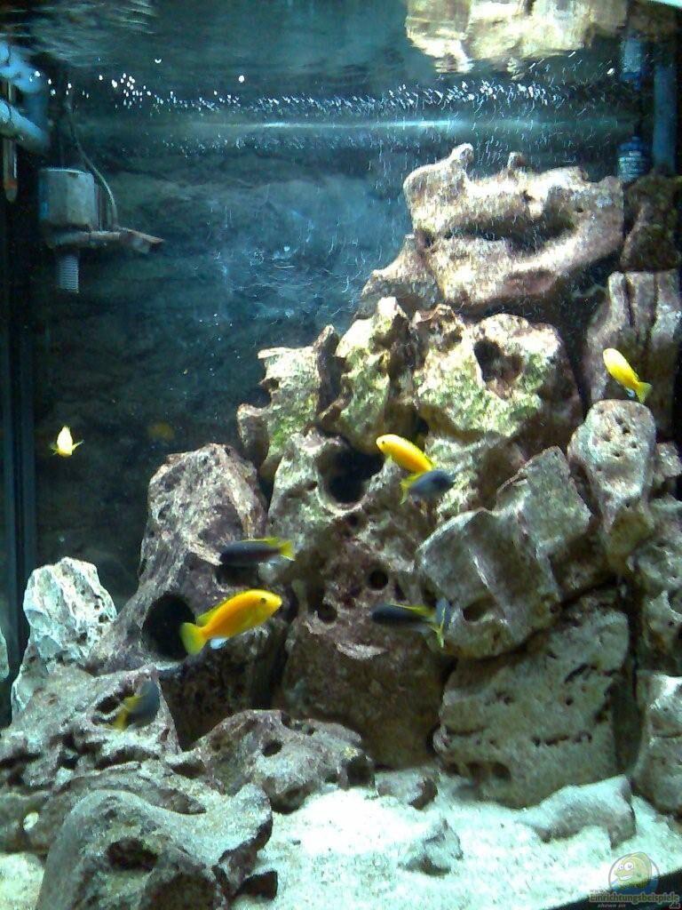 aquarium von michael grube becken 2839. Black Bedroom Furniture Sets. Home Design Ideas
