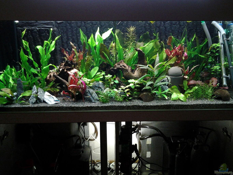 aquarium licht amazing stks laputa led aquarium licht. Black Bedroom Furniture Sets. Home Design Ideas
