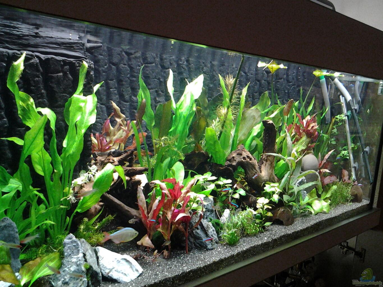 aquarium von phrankdiddie amazonas s damerika live. Black Bedroom Furniture Sets. Home Design Ideas