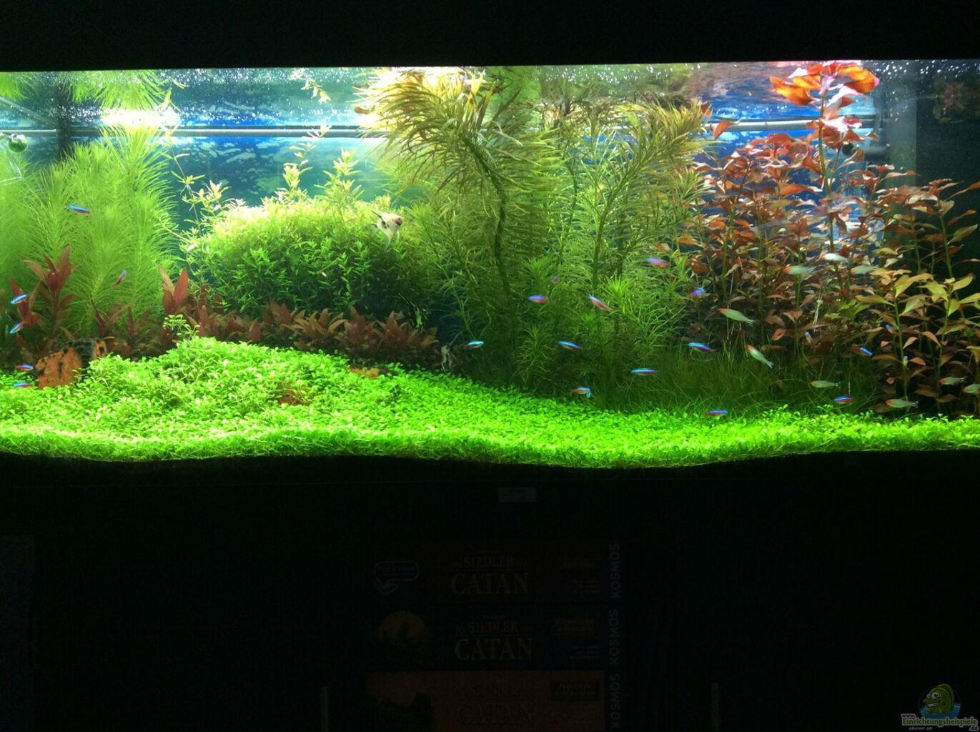 aquarium von terence hill becken 28629. Black Bedroom Furniture Sets. Home Design Ideas