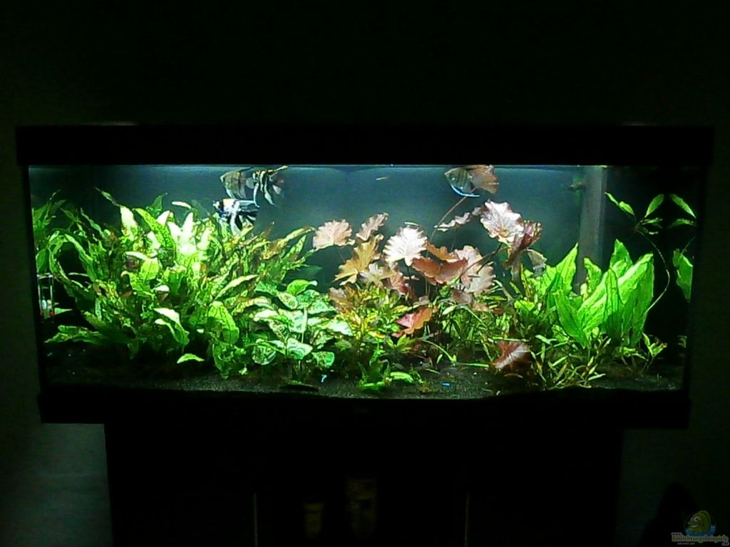 aquarium juwel rio 400 led beleuchtung aquarium juwel. Black Bedroom Furniture Sets. Home Design Ideas