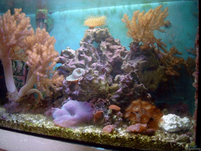 aquarium von christian dresel becken 2870. Black Bedroom Furniture Sets. Home Design Ideas