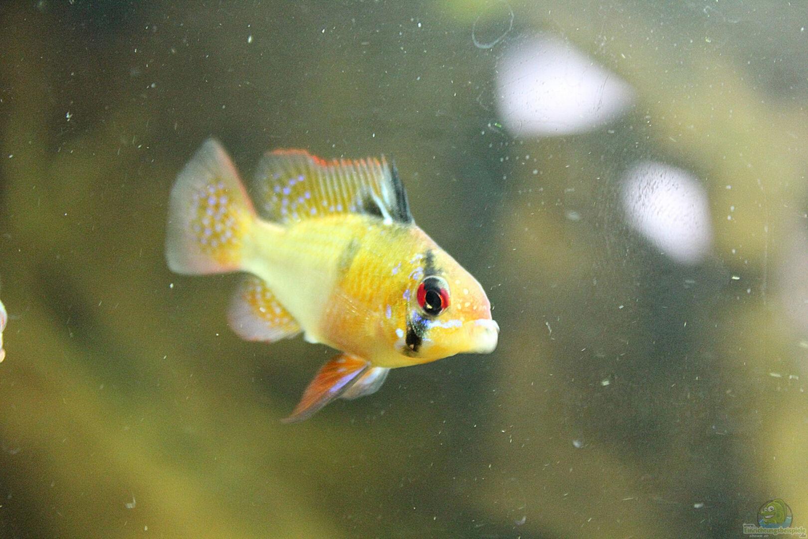 Aquarium von trimmy 28719 mundo root for Skalar futter