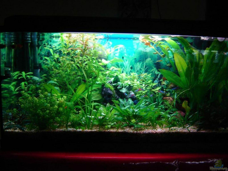 aquarium von marcus lehmann becken 2875. Black Bedroom Furniture Sets. Home Design Ideas