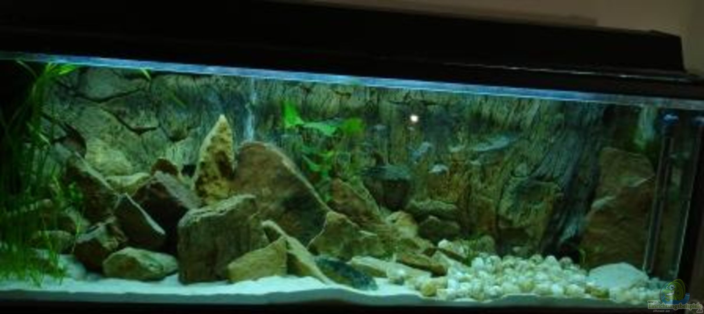 aquarium von susanne gillig becken 2883. Black Bedroom Furniture Sets. Home Design Ideas
