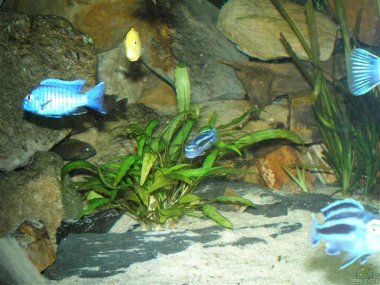 aquarium von buschmeier marcel becken 2888. Black Bedroom Furniture Sets. Home Design Ideas