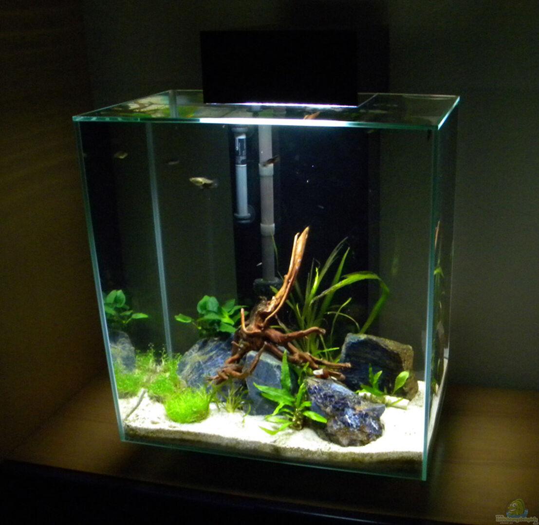 aquarium von flightsim 28888 nano fluval edge ii. Black Bedroom Furniture Sets. Home Design Ideas