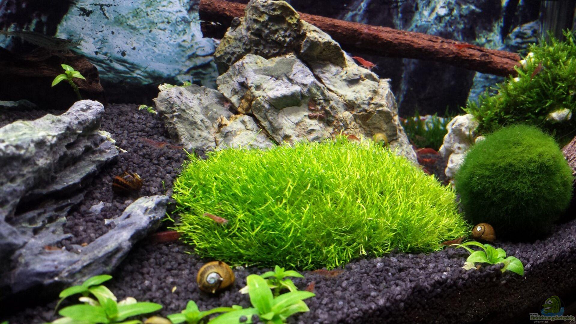 aquarium von lucky3310 28935 nano eigenbau. Black Bedroom Furniture Sets. Home Design Ideas