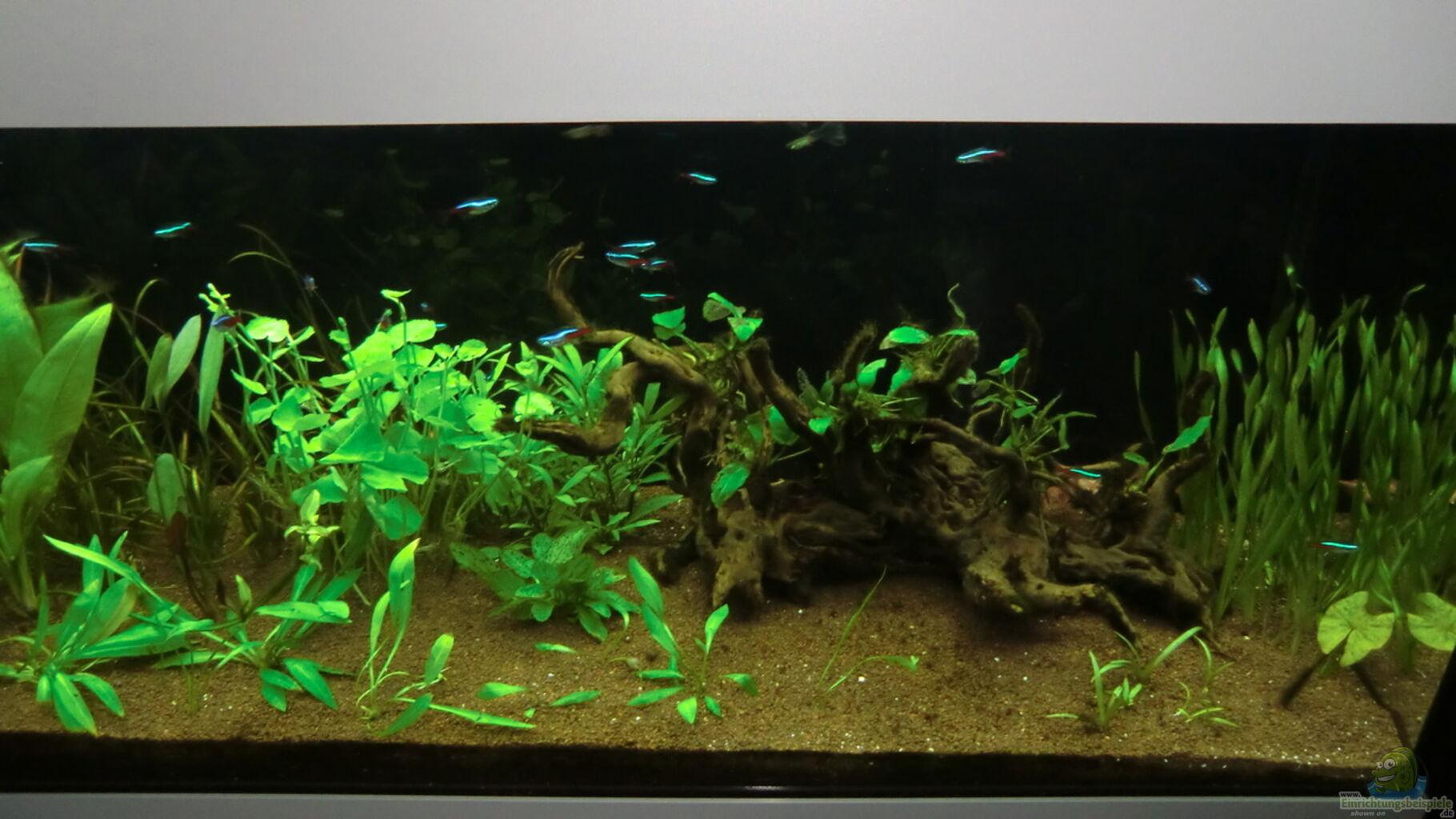 aquarium hauptansicht von rio 180 als raumteiler aus rio 180 als raumteiler von anna s b. Black Bedroom Furniture Sets. Home Design Ideas