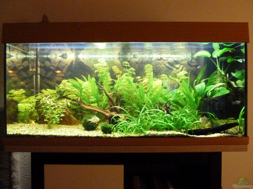 aquarium von jan marc 180l gesellschaftsbecken. Black Bedroom Furniture Sets. Home Design Ideas