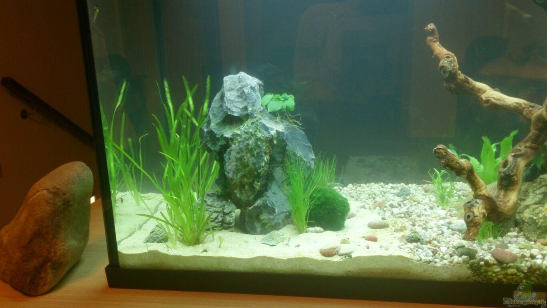 aquarium von plastikblume krebse garnelen co. Black Bedroom Furniture Sets. Home Design Ideas