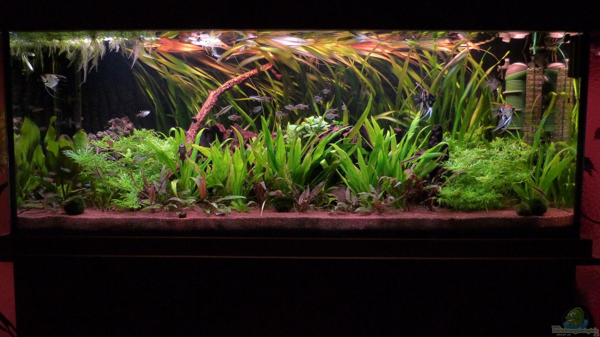 aquarium von dieter 29277 aqualux exklusiv 450 liter. Black Bedroom Furniture Sets. Home Design Ideas