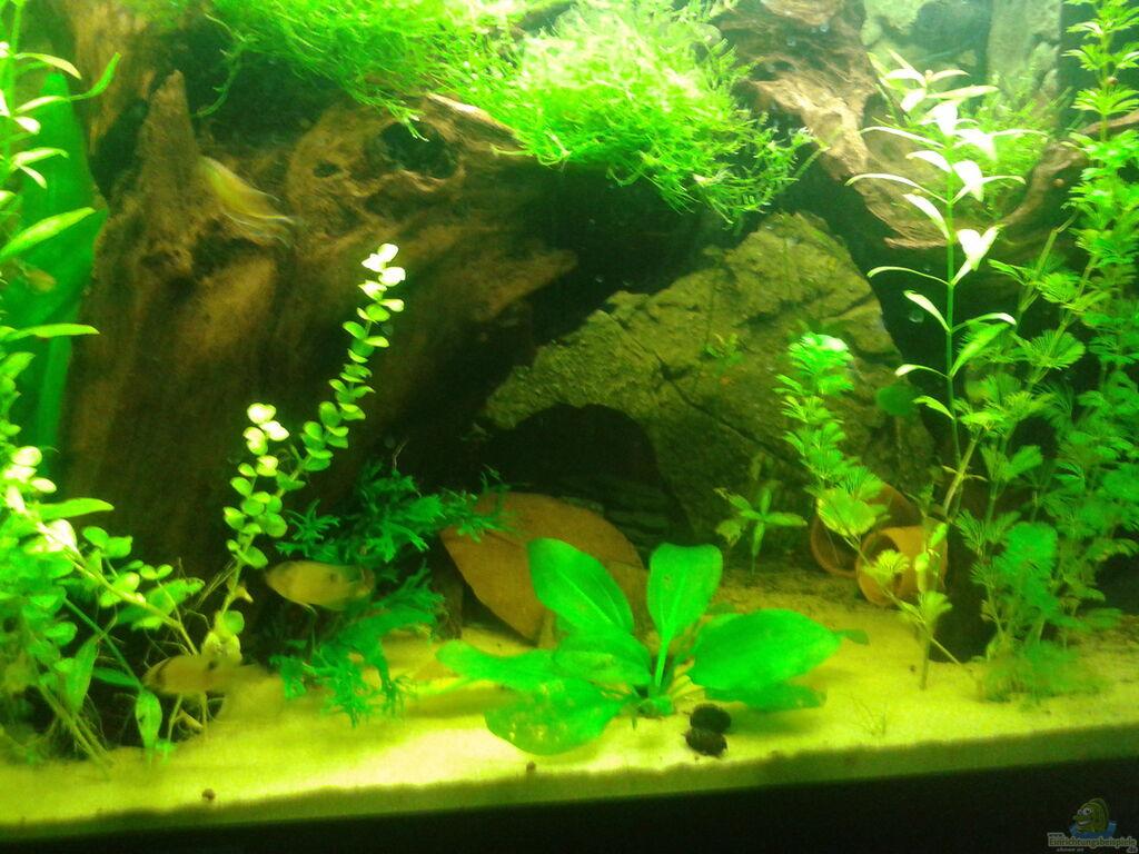 Aquarium von deoroller mein neues for Mein aquarium