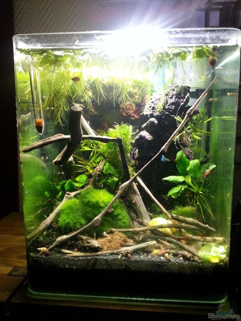 aquarium von zomic sulawesi einrichtungsbeispiele. Black Bedroom Furniture Sets. Home Design Ideas