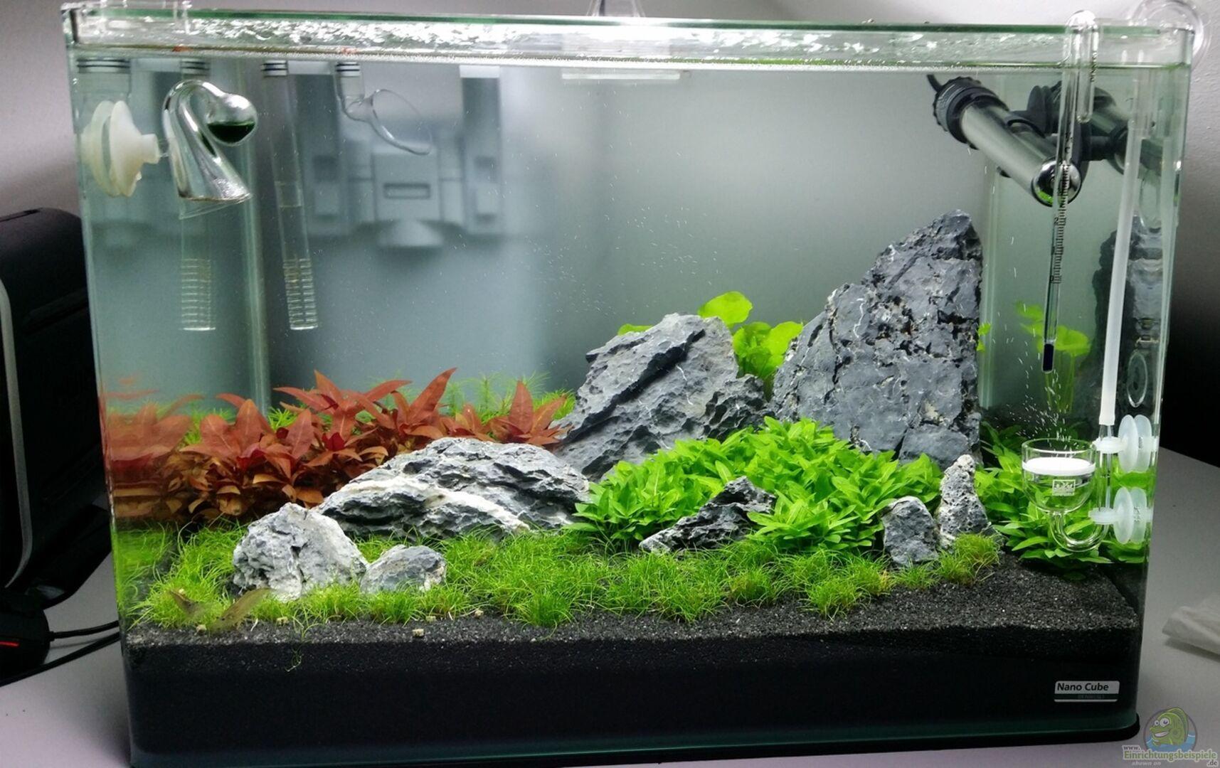 Aquarium Von Kai Uwe M 29477 Scaper S Tank