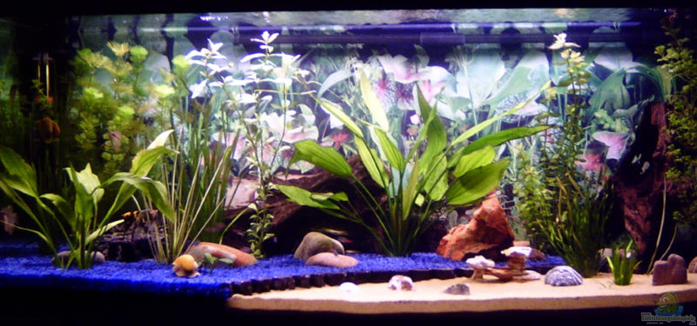 aquarium von stonedman becken 2956. Black Bedroom Furniture Sets. Home Design Ideas