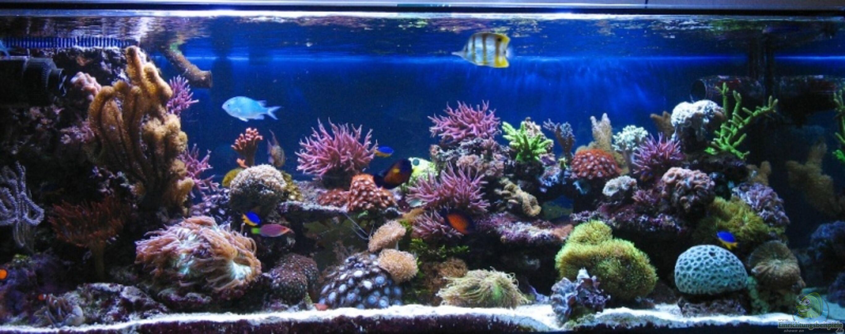 Aquarium von petra kallmeyer becken 2993 for Zierfische hannover
