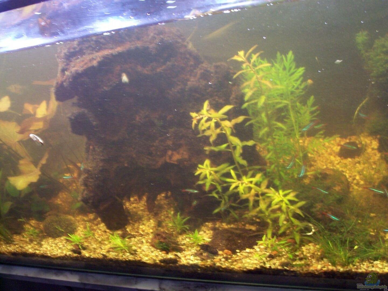 aquarium von jens j becken 30000 als raumteiler. Black Bedroom Furniture Sets. Home Design Ideas