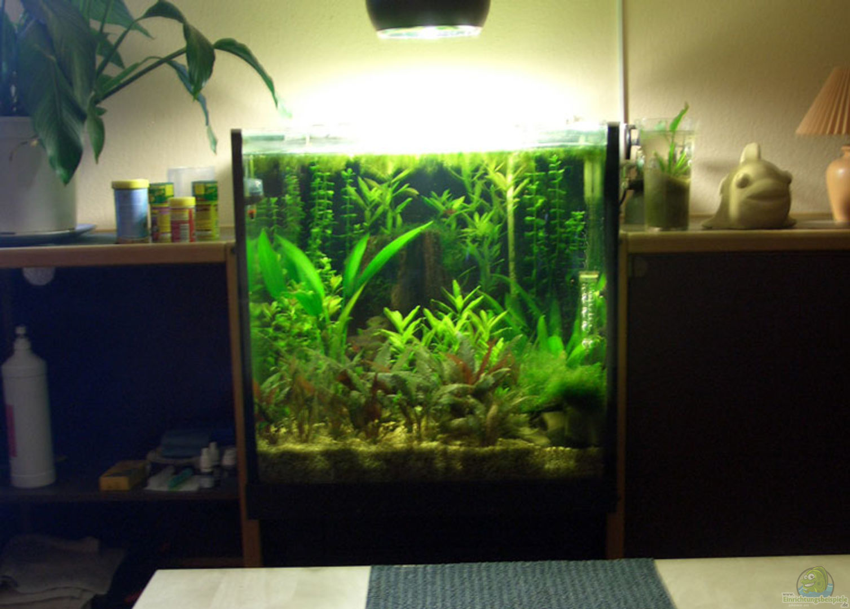 Aquarium von herbert aust becken 3004 for Schrank 60x60x60