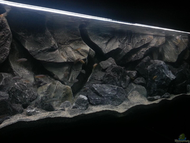 aquarium hauptansicht von klein malawi in haan aus klein malawi in nur noch als beispiel von. Black Bedroom Furniture Sets. Home Design Ideas