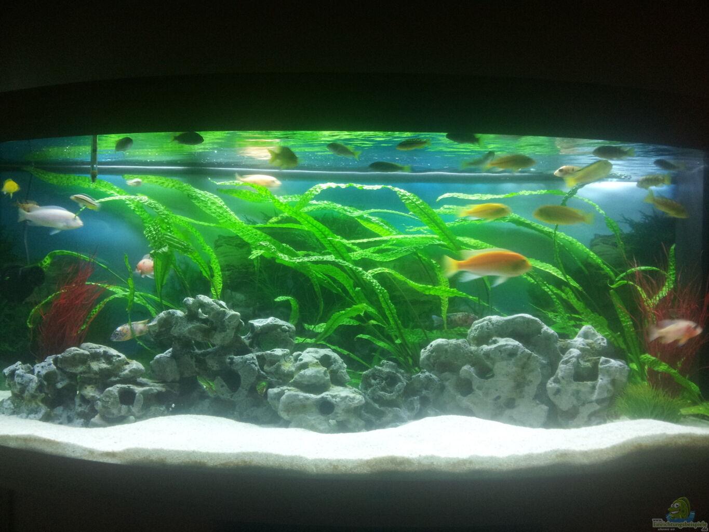 aquarium von tobias malawibecken 450l. Black Bedroom Furniture Sets. Home Design Ideas