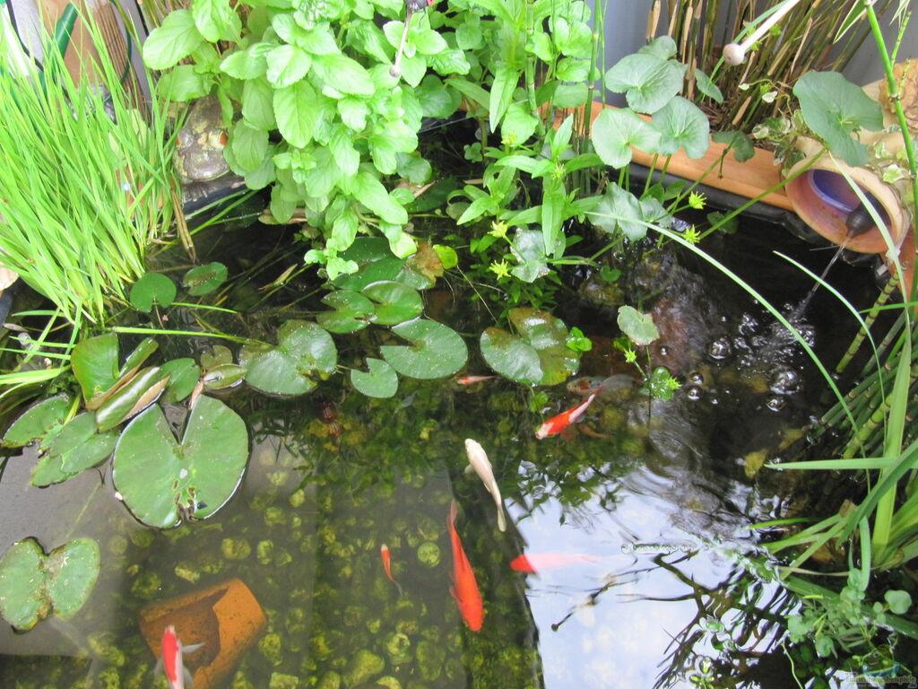 Teich von muschelherz teich 30176 for Teichfische nrw