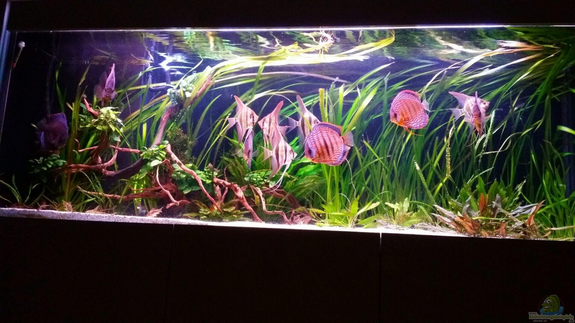 aquarium von dani b 30201 altum. Black Bedroom Furniture Sets. Home Design Ideas