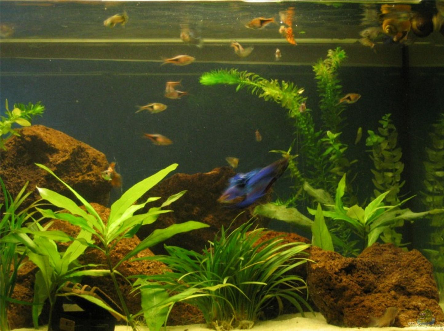 aquarium von sina blessing becken 3022. Black Bedroom Furniture Sets. Home Design Ideas